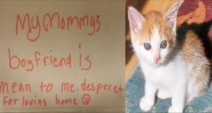 Heartbreaking Letter Left Begging To Help This Poor Kitty
