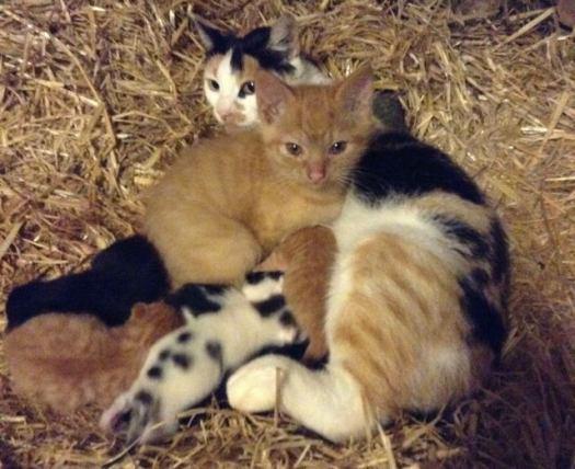 mama-cat-adopts-big-kitten-2