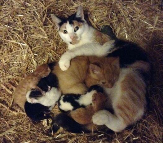 mama-cat-adopts-big-kitten-3