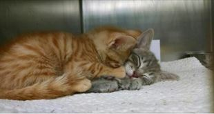 This Picture of Shelter Kitties Hugging Each Other Will Melt Your Heart