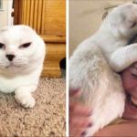 Woman Adopts Deaf Senior Cat Without Ears Everybody Ignored, And After That He Rescues Her