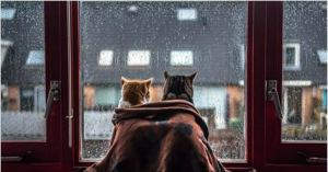 Cats Simply Love Rainy Weather. AWW. So Fascinating