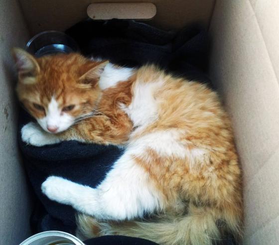 rescue-kitten-under-fridge-2