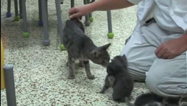 Wonderful Kitties Reunited With Abused Mom Cat. Heartwarming Video !