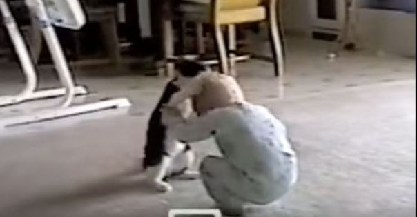 Cutest Wrestling Match Ever Between Baby And Cat. Hilarious !