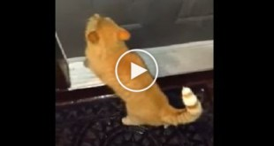 Cat Knocks On The Door With Paws To Go Inside ! Very Smart Kitty!