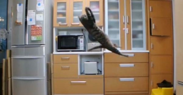 This Cat Will Be The Best Goalkeeper. Just Look At That Incredible Jump !