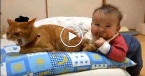 Baby Biting Cat Tail. Watch The Reaction of The Cat ! Must WATCH !