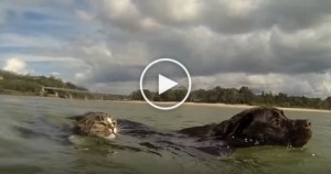 Cat And Dog Swimming In The Ocean. This Is A PURE Happiness ! Must Watch