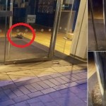 Cat Robber Found Stranded In England Bank