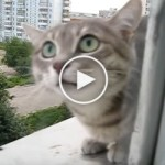 Neighboring Cat Knocked On Window And Then Attacked This Man