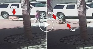 Brave Kitty Saves a Kid From BRUTAL Dog Attack. Unbelievable VIDEO !