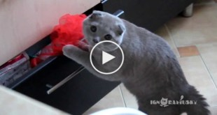 Cat Caught Stealing On the Scene. What She Did Next Is Hilarious !