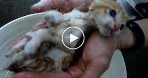 Rescued Kitten Covered in Fleas Taking a First Bath. Heartwarming VIDEO !