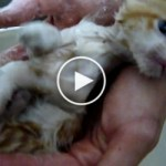 Rescued Kitten Covered in Fleas Taking a First Bath. Heartwarming VIDEO !