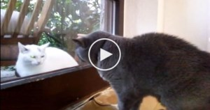 The Neighbor`s Cat Knocked on The Glass Door, But When House Cat Noticed Her ….