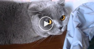 Guilty Cat Hiding From His Owner. Just Look At That Face.