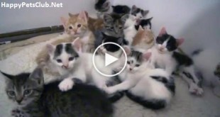 So Many Rescued Kittens In One Room Staring Directly at You. Must Watch !
