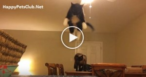 You Won`t Believe Your Eyes. What This Cat Does Is Amazing. Must See