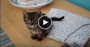 They Found This Cute Lonely Kitten In Their Garden. Amazing Rescue Story !
