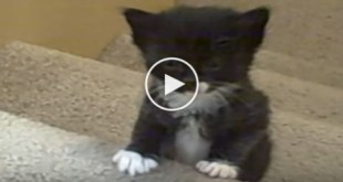 Kittens First Adventure on The Stairs. See How Cute They Are...