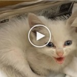They Rescued a Kitten Thrown In Trash Can. One Hour Later… Incredible …