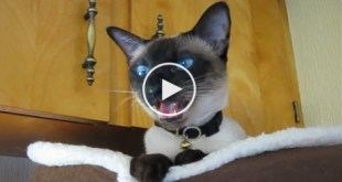 """Just Watch How This Cat Reacts, When Her Human Asked Her """"Are You Hungry"""". LOL"""