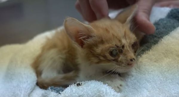 This Is The Saddest Kitten You`ve Ever Seen... But, See The Amazing Transformation !