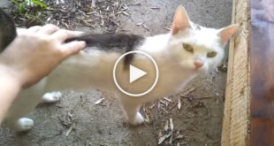 Feeding The Stray Cat Will Warm Your Heart