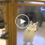 Kitty In Shelter Noticed Her Favorite Human. Her Reaction Is Heartwarming !