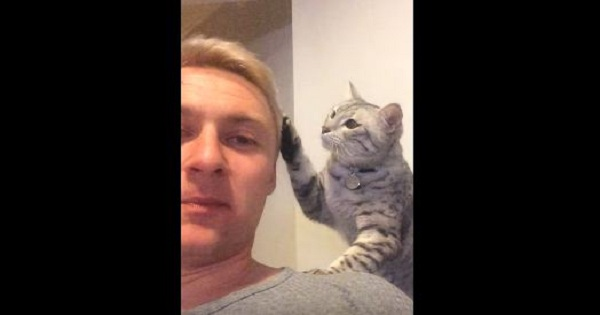 Affectionate Cat Saying He Is Sorry In The Cutest Way Ever