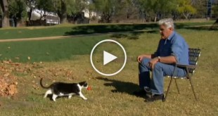 Jay Leno Proves Cats Are Smarter Than Dogs In This Hilarious Video!