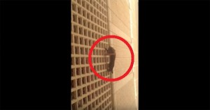 Students Rescued Helpless Kitty from 7th Floor Fall