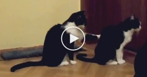 Cat Trying To Apologize. But, Watch Till The END ! Hilarious !