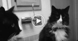 This is: Henri Le Chat Noir. You Will 100% Love This Cat !