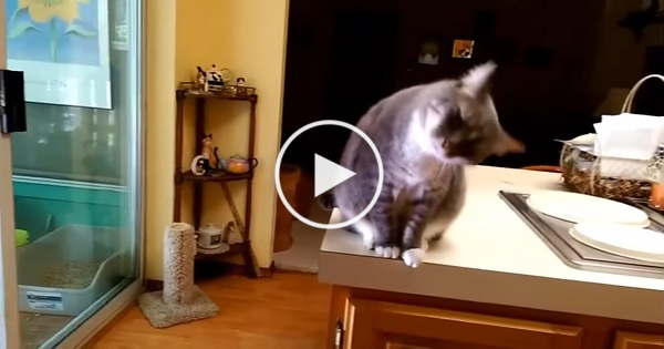 This Cute Kitty Bows Every Time Someone Greets Him !