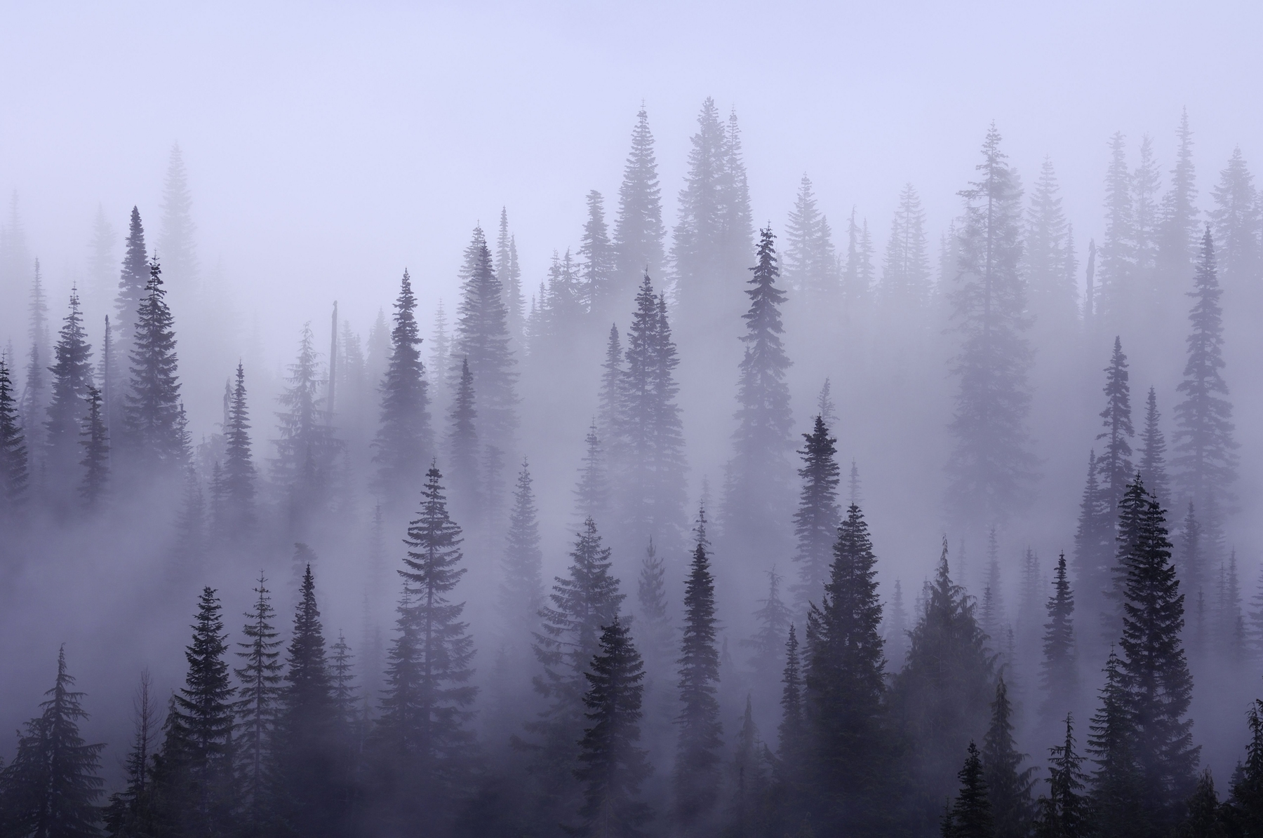 Fall Woodsy Pc Wallpaper Buy Misty Forest Wallpaper Free Us Shipping At Happywall Com