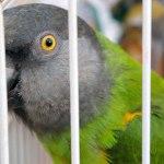 Perhatikan Keamanan Politur untuk Sangkar Burung Anda