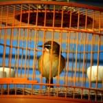 Cara Aman Mengecat Sangkar Burung dengan Orchid