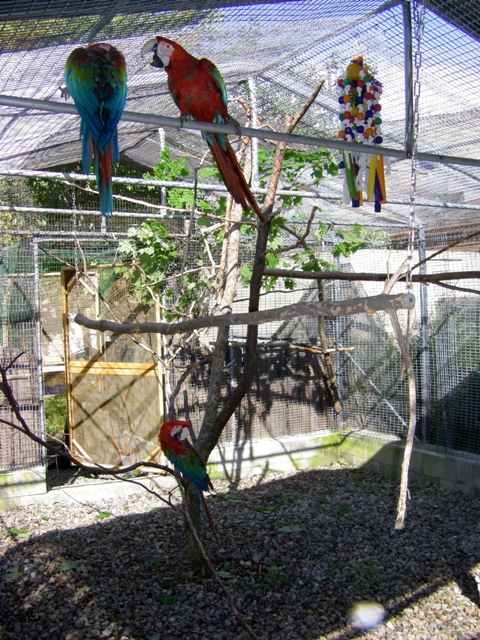 Voliere Perroquet Exterieur Designing An Outdoor Parrot Flight Or Aviary - Hari