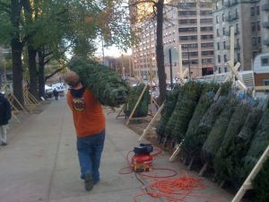  Holiday trees available on Harlem&#039;s Cathedral Parkway