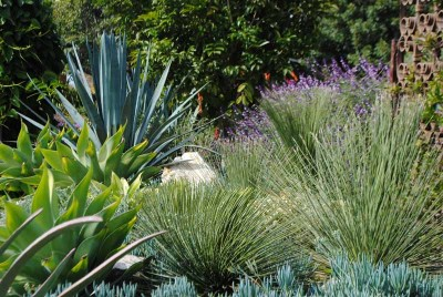 one of the striking design elements i found in this garden was that of repetition in this case repetition of form with the use of various agave and