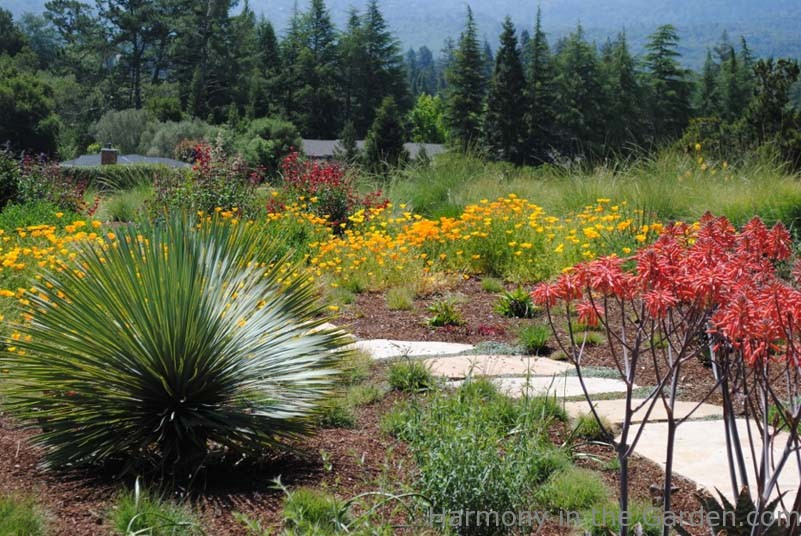 Garden Designers Roundtable: Designing With Natives | Harmony In
