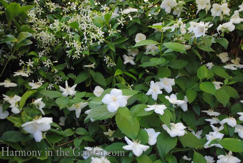 Cómo iniciar un jardín de flores | Flores de Avas