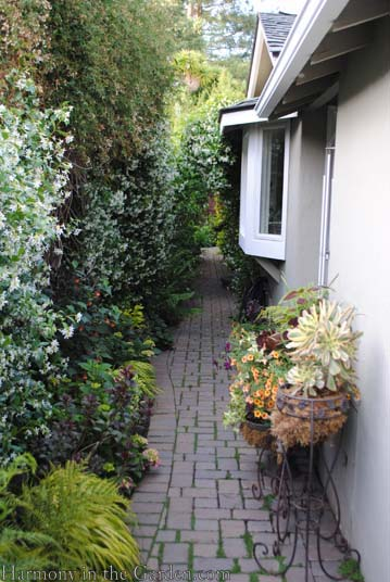 Transforming A Side Yard From Blah To Beautiful Harmony