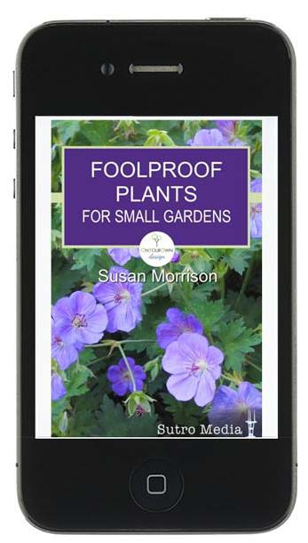 foolproof-plants-for-small-gardens