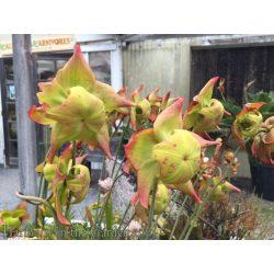 Small Crop Of Carnivorous Plant Terrarium