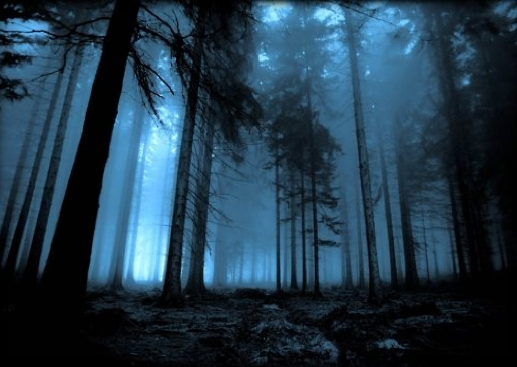 Anime Mix Wallpaper The Sounds Of The Forest Audio Atmosphere
