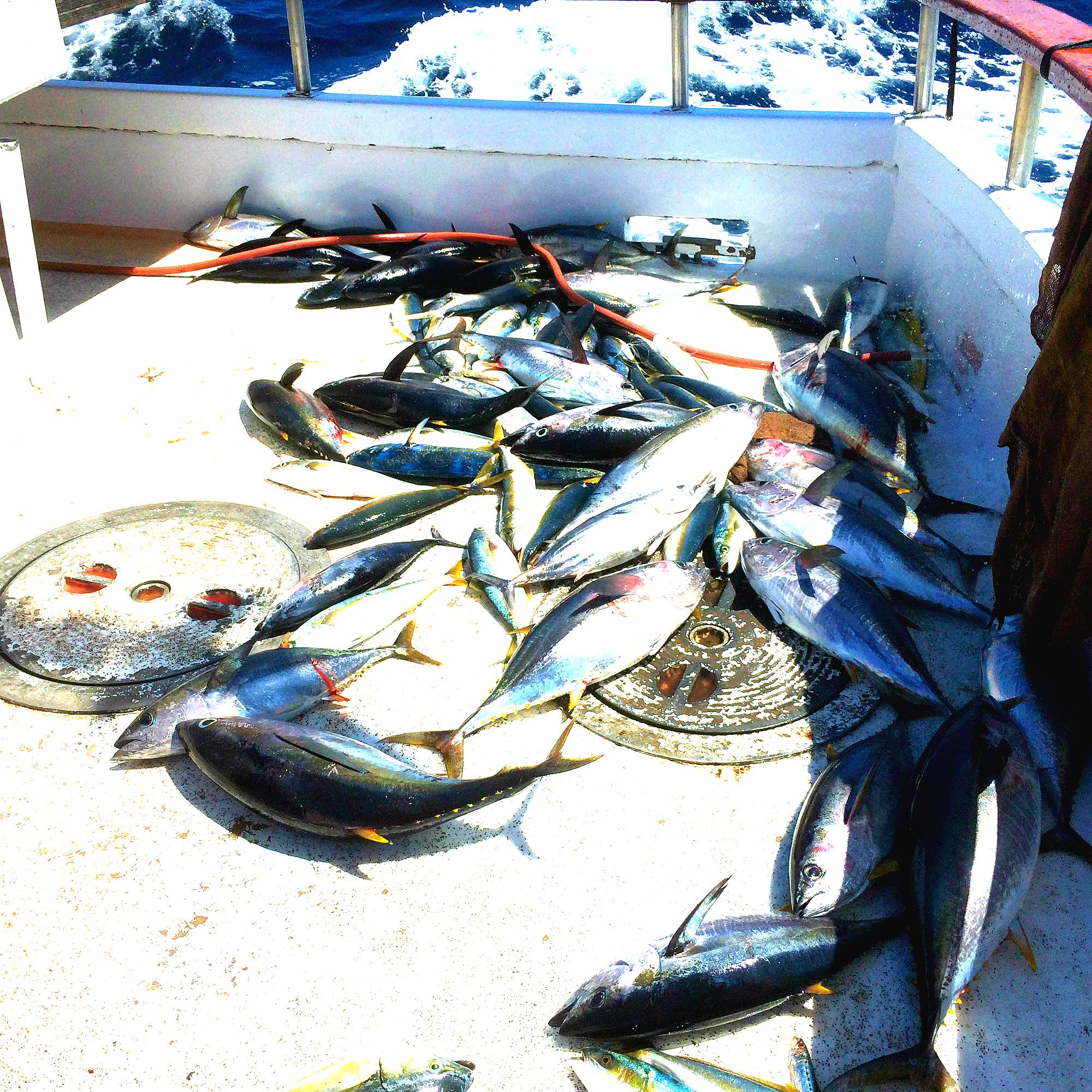 Deep sea fishing in san diego ca harvesting nature for Deep sea fishing northern california
