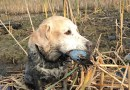 The Beauty and Wonder of Duck Hunting